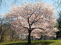 Endow a Tree