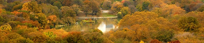 central park trees in autumn